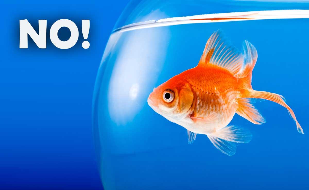 Un acquario con pesci rossi fish friend for Vasche esterne per pesci rossi
