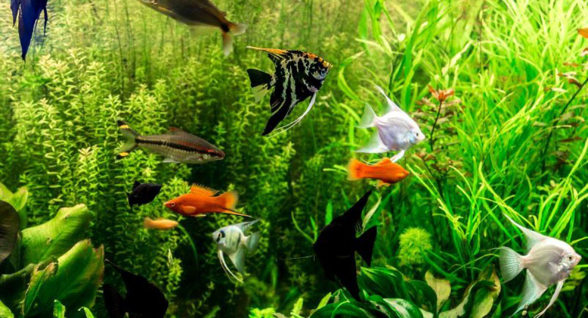 Acquario-FISH-FRIEND