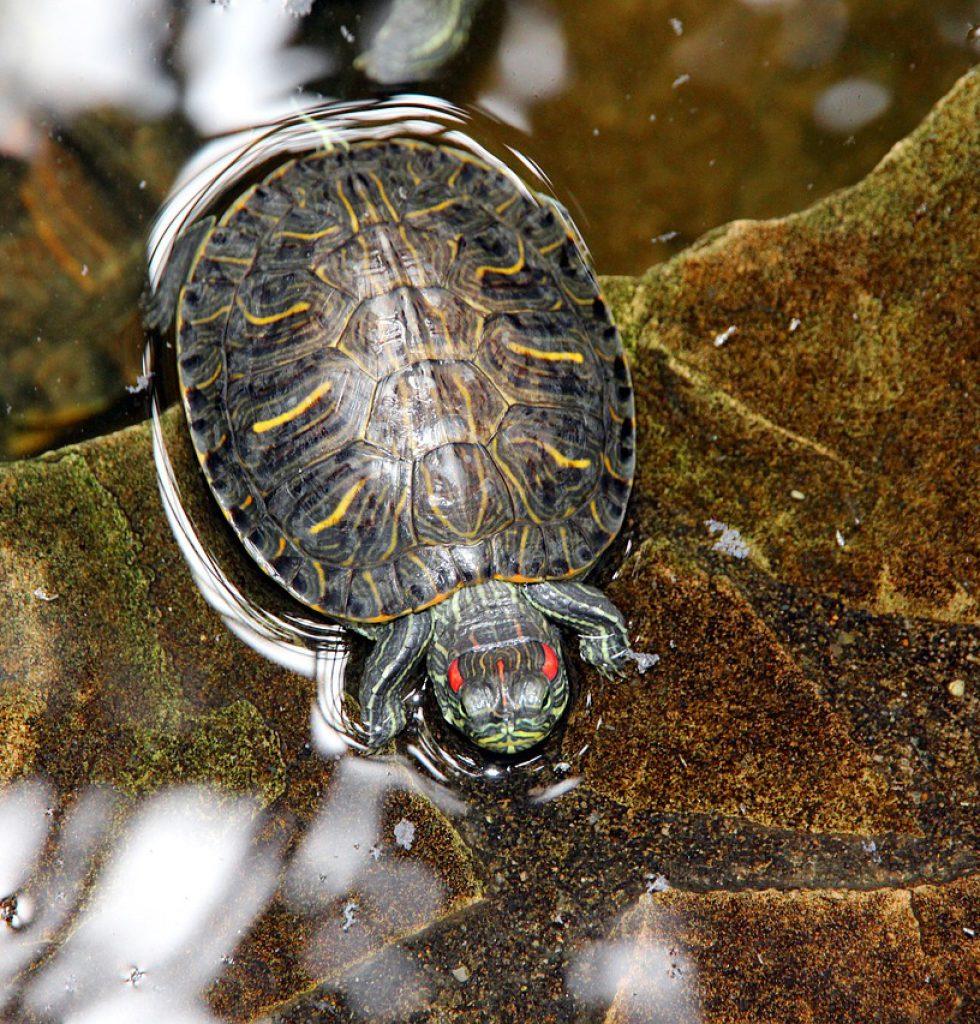tortoise-3405326_1280